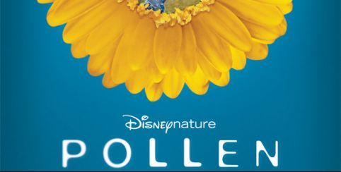 "Projection du documentaire ""Pollen""  de Disney Nature // Carnuta"